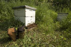 Beehive_photo