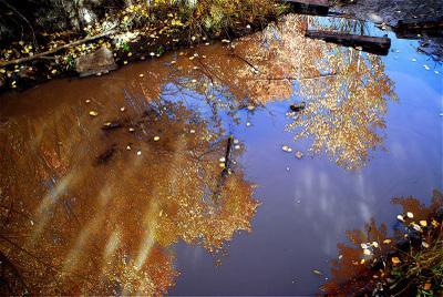 Reflection_2