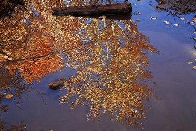 Reflection_3