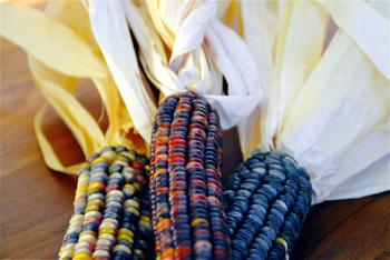 Dried_corn