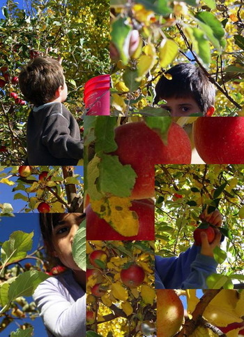 Apple_collage_2