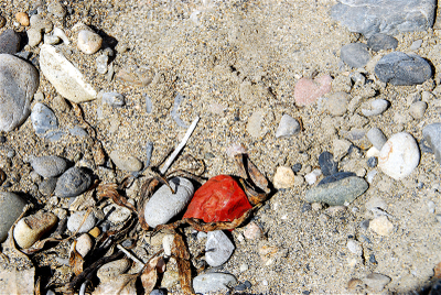 Red_rock_on_ground_2