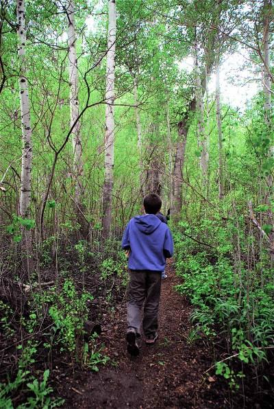 Mushroom_trail