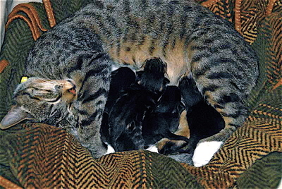 Frances_and_kittens