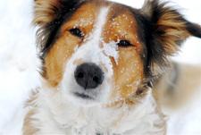Snow_face_2