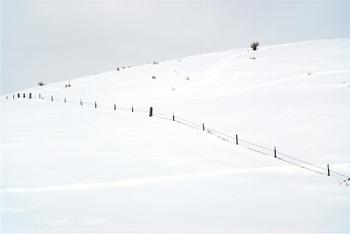 Fence_line